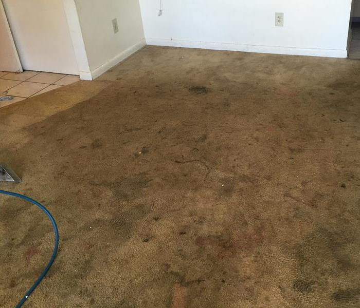 Carpet Cleaning in Palatka, FL Before