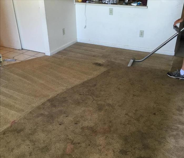 Apartment Carpet Cleaning
